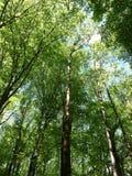 φωτεινό δάσος Στοκ Φωτογραφίες