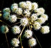 Φωτεινό άσπρο λουλούδι Στοκ εικόνες με δικαίωμα ελεύθερης χρήσης