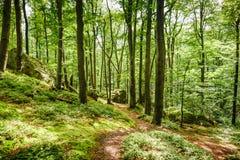 φωτεινό ανθίζοντας πράσινο δέντρο άνοιξη φύσης κλάδων Όμορφη σκηνή στο πράσινο δάσος Στοκ Φωτογραφία