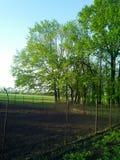 φωτεινό ανθίζοντας πράσινο δέντρο άνοιξη φύσης κλάδων Στοκ Εικόνες