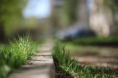 φωτεινό ανθίζοντας πράσινο δέντρο άνοιξη φύσης κλάδων Φύλλα και οι Μπους με τα πρώτα πράσινα φύλλα μέσα Στοκ εικόνες με δικαίωμα ελεύθερης χρήσης
