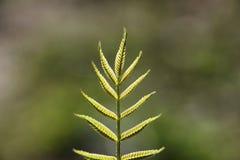 φωτεινό ανθίζοντας πράσινο δέντρο άνοιξη φύσης κλάδων Φύλλα και οι Μπους με τα πρώτα πράσινα φύλλα μέσα Στοκ Φωτογραφίες