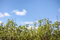 φωτεινό ανθίζοντας πράσινο δέντρο άνοιξη φύσης κλάδων Φύλλα και οι Μπους με τα πρώτα πράσινα φύλλα μέσα Στοκ εικόνα με δικαίωμα ελεύθερης χρήσης