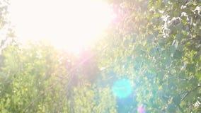 Φωτεινό απόγευμα στο δασικό, θολωμένο υπόβαθρο και sunlights με τη φλόγα φακών σε σε αργή κίνηση 1920x1080 φιλμ μικρού μήκους