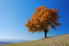 φωτεινό δέντρο πτώσης στοκ φωτογραφία