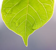 φωτεινό ζωηρόχρωμο πράσινο  στοκ φωτογραφία με δικαίωμα ελεύθερης χρήσης