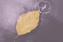 Φωτεινό ζωηρόχρωμο φύλλο φθινοπώρου που επιπλέει στο νερό εκλεκτής ποιότητας αναδρομικό Fil Στοκ Φωτογραφία