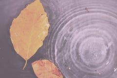 Φωτεινό ζωηρόχρωμο φύλλο φθινοπώρου που επιπλέει στο νερό εκλεκτής ποιότητας αναδρομικό Fil στοκ φωτογραφίες με δικαίωμα ελεύθερης χρήσης