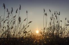 Φωτεινό ηλιοβασίλεμα στον ορίζοντα μεταξύ των χλοών Στοκ Εικόνα