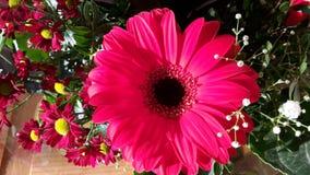 φωτεινό διάνυσμα εικόνων λουλουδιών ανθοδεσμών Στοκ φωτογραφία με δικαίωμα ελεύθερης χρήσης