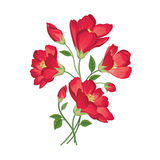 φωτεινό διάνυσμα εικόνων λουλουδιών ανθοδεσμών floral σειρά πλαισίων πλαισίων Ακμάστε τη ευχετήρια κάρτα Άνθιση φ Στοκ Φωτογραφίες