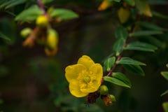 Φωτεινό κίτρινο λουλούδι εξωτικό στοκ εικόνα με δικαίωμα ελεύθερης χρήσης