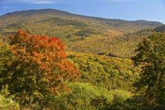 Φωτεινό κόκκινο δέντρο σφενδάμνου που αγνοεί τα βουνά σάντουιτς, Woodstock, Στοκ Εικόνες