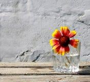 Φωτεινό λουλούδι σε ένα γκρίζο υπόβαθρο Στοκ Φωτογραφίες