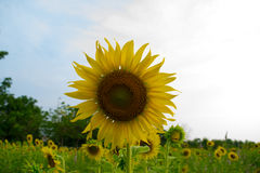 φωτεινό λουλούδι Στοκ φωτογραφίες με δικαίωμα ελεύθερης χρήσης