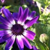 φωτεινό λουλούδι Στοκ Εικόνα