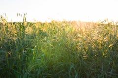 φωτεινό πεδίο πράσινο πέρα &alph πράσινο λιβάδι Στοκ φωτογραφίες με δικαίωμα ελεύθερης χρήσης