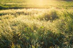 φωτεινό πεδίο πράσινο πέρα &alph πράσινο λιβάδι Στοκ Φωτογραφίες