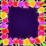 Φωτεινό πλαίσιο λουλουδιών τουλιπών Στοκ Εικόνα