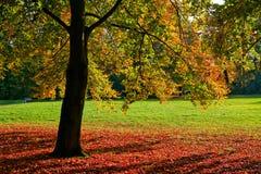 φωτεινό πολύχρωμο δέντρο πά&r Στοκ φωτογραφία με δικαίωμα ελεύθερης χρήσης