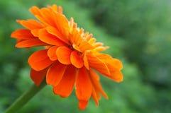 φωτεινό πράσινο πορτοκάλι  στοκ εικόνες