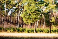 Φωτεινό φως του ήλιου στη χλόη και το δάσος λιβαδιών Στοκ Φωτογραφίες