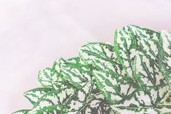 Φωτεινό φύλλο φυτών Στοκ εικόνα με δικαίωμα ελεύθερης χρήσης