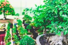 Φωτεινό φύλλο φυτών Στοκ Φωτογραφία