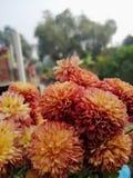 φωτεινό χωριό λουλουδιών δροσιάς πράσινο φυσικό στοκ φωτογραφίες με δικαίωμα ελεύθερης χρήσης