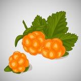 Φωτεινό juicy cloudberry στο γκρίζο υπόβαθρο Γλυκός εύγευστος για το σχέδιό σας στο ύφος κινούμενων σχεδίων επίσης corel σύρετε τ Στοκ εικόνες με δικαίωμα ελεύθερης χρήσης