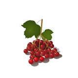 Φωτεινό viburnum μούρων Στοκ Εικόνες