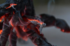 Φωτιά στενό επάνω 1 Στοκ Εικόνες