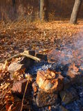 Φωτιά στο δάσος φθινοπώρου Στοκ φωτογραφίες με δικαίωμα ελεύθερης χρήσης