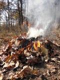 Φωτιά στο δάσος φθινοπώρου Στοκ φωτογραφία με δικαίωμα ελεύθερης χρήσης