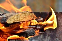 Φωτιά στο δάσος Στοκ φωτογραφίες με δικαίωμα ελεύθερης χρήσης