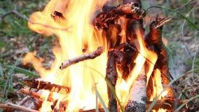 Φωτιά στο δάσος φιλμ μικρού μήκους