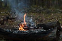 Φωτιά τουριστών στο δάσος φθινοπώρου στοκ φωτογραφία με δικαίωμα ελεύθερης χρήσης