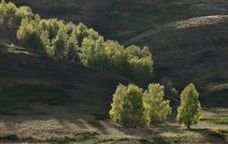 Φωτισμένα δέντρα στην κλίση λόφων Στοκ εικόνα με δικαίωμα ελεύθερης χρήσης
