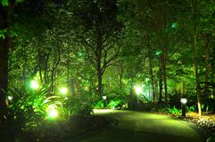 Φωτισμένα δέντρα τή νύχτα Στοκ εικόνες με δικαίωμα ελεύθερης χρήσης
