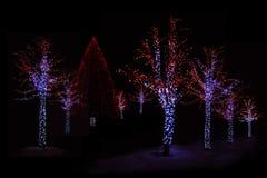 Φωτισμένα δέντρα τη νύχτα Στοκ Εικόνες