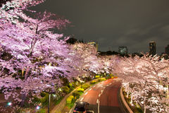 Φωτισμένα δέντρα κερασιών κατά μήκος της οδού στο Τόκιο της περιφέρειας του κέντρου, minato-Ku, Τόκιο, Ιαπωνία την άνοιξη στοκ φωτογραφίες