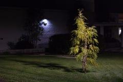 Φωτισμένο μικρό δέντρο τη νύχτα στη αστική περιοχή Στοκ εικόνα με δικαίωμα ελεύθερης χρήσης