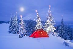 Φωτισμένο χειμερινό δάσος Carpathians στοκ εικόνα