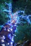 Φωτισμοί του μεγάλου δέντρου που τυλίγεται από τα οδηγημένα φω'τα για το Φε Χριστουγέννων στοκ εικόνα με δικαίωμα ελεύθερης χρήσης
