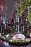 Φωτισμοί Χριστουγέννων στο πάρκο στοκ εικόνα με δικαίωμα ελεύθερης χρήσης