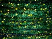 Φωτισμός χριστουγεννιάτικων δέντρων Στοκ Εικόνες