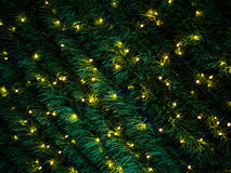 Φωτισμός χριστουγεννιάτικων δέντρων Στοκ Φωτογραφίες