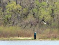 Φωτογράφος που παίρνει την εικόνα του πετώντας άσπρου πελεκάνου στο κρατικό πάρκο κολπίσκου κερασιών στοκ εικόνες