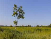 Φωτογραφία δέντρων τοπίων Στοκ Εικόνα