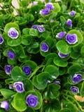 Φωτογραφία εικόνας τεχνητών λουλουδιών στοκ φωτογραφίες